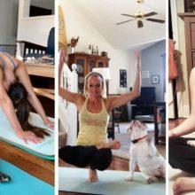 10 animais de estimação flexíveis que adoram fazer ioga com seus humanos