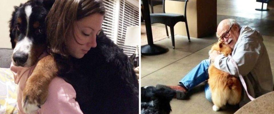 15 fotos adoráveis de cachorros abraçando seus humanos