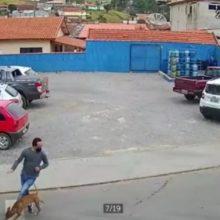 A história do cachorro que atropela um homem que tentava atravessar a rua