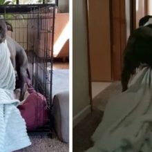 Cachorro assustado e traumatizado se recusa a largar seu cobertor desde que foi resgatado