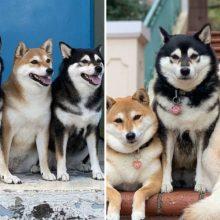 Cachorro faz caretas engraçadas em todas as fotos tiradas com seus irmãos