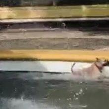 Cachorro foge de casa e é flagrado tomando banho em chafariz da cidade