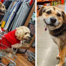 Cachorro que foi abandonado se torna o melhor funcionário de uma loja