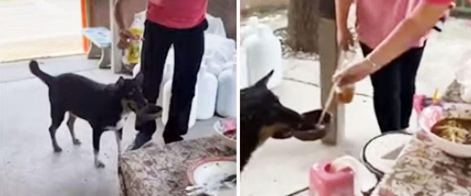 Cachorro traz sua própria tigela a um restaurante para ganhar comida