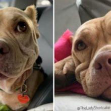 Cão de rua não consegue parar de sorrir depois de ser resgatado