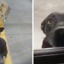 Dois cães de rua no estacionamento abanam o rabo para todos na esperança de serem adotados