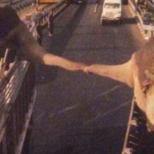 Elefantes dizem seu último adeus antes de serem separados para sempre