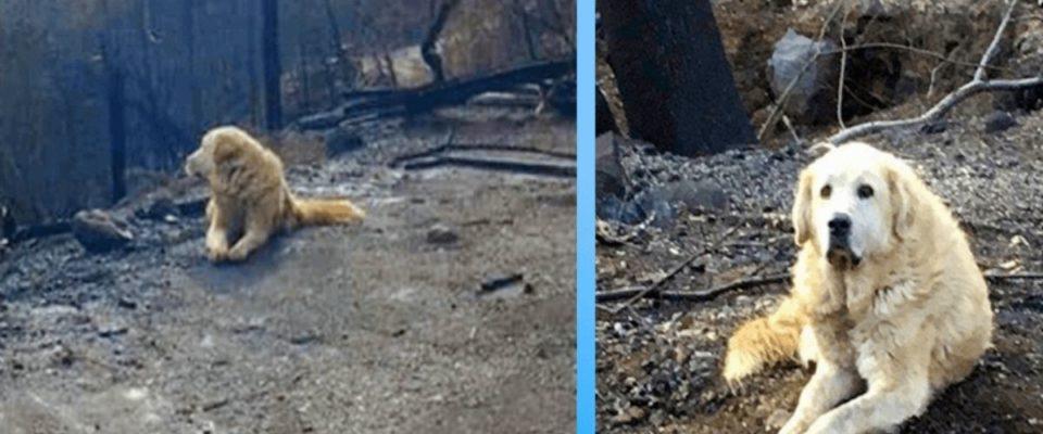 Família volta para casa depois do incêndio e encontra seu cão esperando por eles