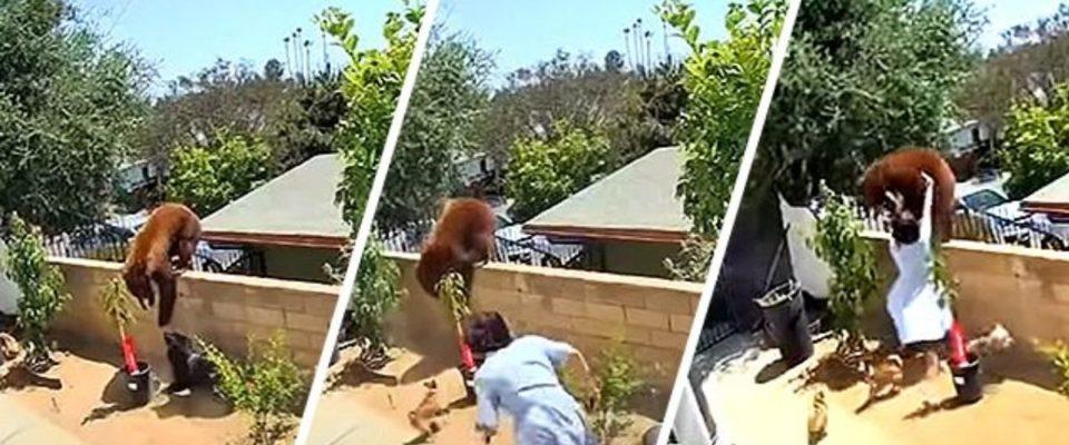 Garota de 17 anos empurra um urso para salvar seus cachorros