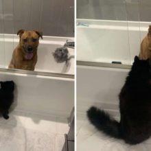 Gato compassivo conforta seu amigo cachorro durante uma tempestade assustadora
