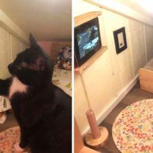 Gato tem seu próprio quarto com uma TV para assistir a seus vídeo favoritos