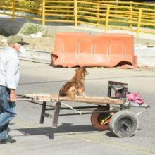 Idoso leva seu cachorro em um carrinho de mão para acompanhá-lo ao trabalho