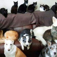 Mulher consegue fazer com que seus 17 cães e gatos fiquem parados para uma foto de família