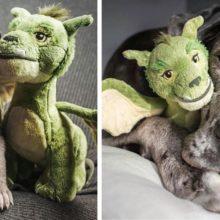 10 adoráveis cachorros antes e depois de se tornarem cachorros grandes