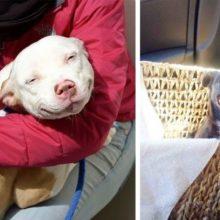 10 Cachorros adoráveis em seu primeiro dia de adoção – Momento Único