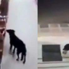 Cachorro rouba uma sacola de comida de um supermercado e limpa as patas antes de sair