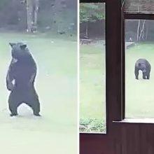 Cachorro vê um filhote de urso entrar em seu jardim e o convida para brincar