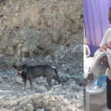 Cão leva homem até a montanha para salvar um bebê abandonado