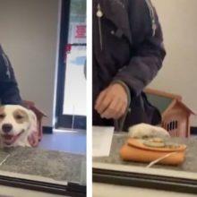 Cão não consegue esconder a alegria ao descobrir que finalmente seria adotado