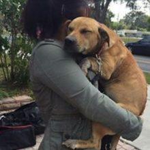 Cão traumatizado com cicatrizes nas costas e na cabeça não consegue acreditar que finalmente foi resgatado