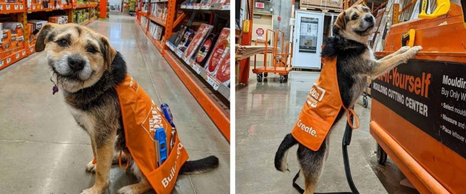 Companhia contrata ex-cão de abrigo como funcionária, e ela é a funcionária mais trabalhadora de todos os tempos