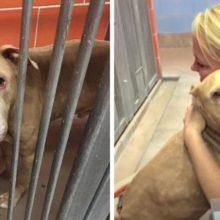 Elas adotaram um cão com câncer terminal e tornaram seus últimos meses de vida os mais felizes