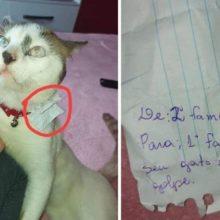 """Família descobre que seu gato leva uma vida dupla """"toma o café da manhã"""" em outra casa todas as manhãs"""