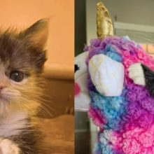 Gatinho com forte vontade de viver se transforma de minúsculo prematuro em adorável gatinho fofo