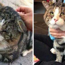Gato perdido não consegue parar de ronronar depois de encontrar uma família para aquecer seu coração