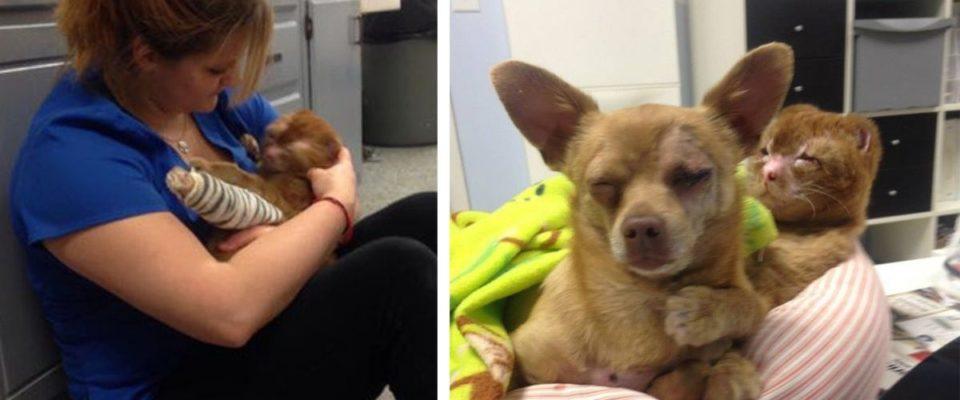 Gato resgatado de incêndio agora cuida de outros animais na clínica veterinária