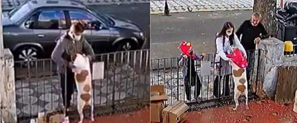 Homem rouba roupa de cachorrinha e médica veterinária inconformada leva roupa para ela