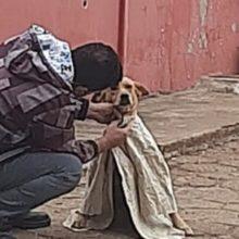 Homem veste camisa em cão abandonado que tremia de frio um lindo gesto de amor