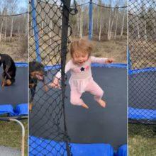Menina de 3 anos e seu cachorro se divertem com divertidos pulos em cama elástica