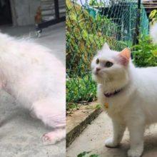 Mulher salva uma gatinha que tinha perdido a esperança de viver, você vai amar a sua transformação