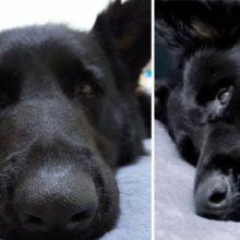 Ratinho sempre corre para seu amigo cachorro para tirar uma soneca