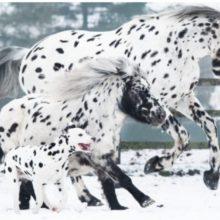 Um lindo trio formado por um cavalo, um pônei e um cachorro parecem irmãos