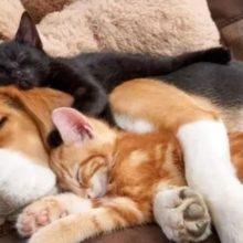 10 fotos de cães e gatos se abraçando para encher o seu coração de amor
