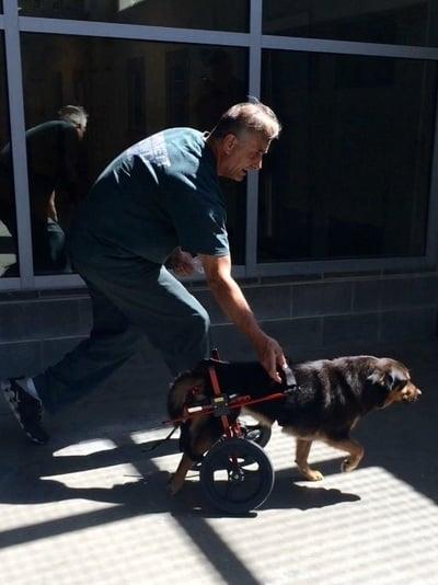 Cachorro com deficiência 2