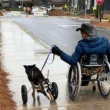 Cachorro com deficiência foi devolvido 4 vezes até encontrar alguém que o entende