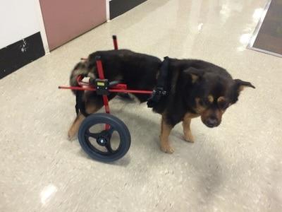 Cachorro com deficiência 3