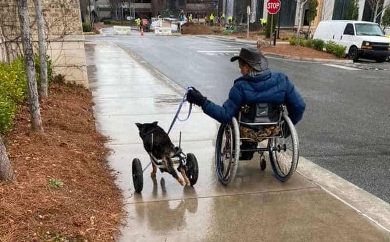 Cachorro com deficiência 4
