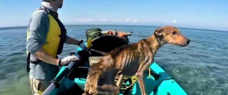 Fotógrafo encontra cachorro abandonado em uma ilha deserta e o resgata