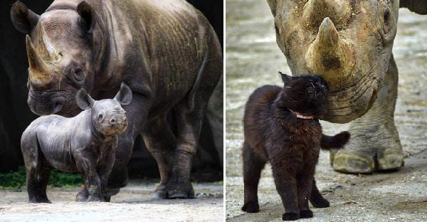 Zoológico adotou gatos 2