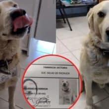 Cachorro de rua foi contratado por uma farmácia como chefe de segurança