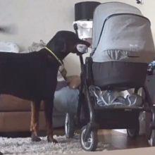 Cão conforta sua irmã humana que está chorando com um gesto muito comovente