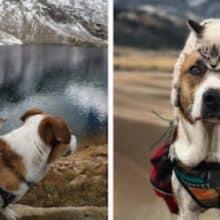 Este cão e gato são melhores amigos e estão viajando pelo mundo juntos