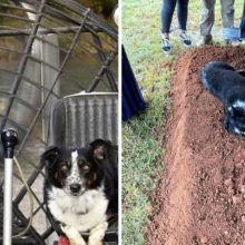 Foto comovente mostra um cachorro deitado no túmulo do seu humano
