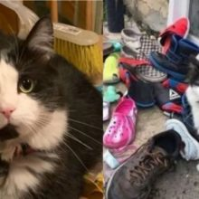Gato rouba sapatos dos vizinhos para dar para sua mãe humana, a sua cara de inocente é a melhor