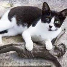Gato visita o túmulo de seu tutor todos os dias e leva presentes para ele