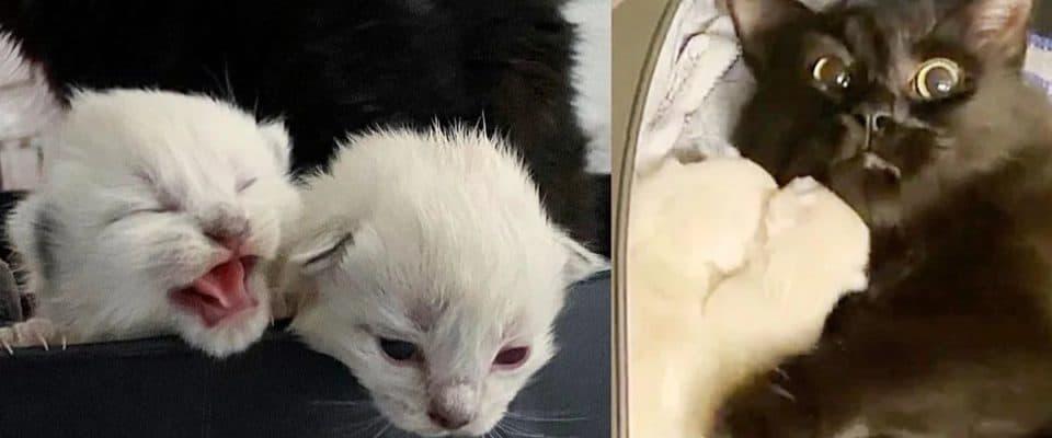 Mulher ajuda gatinha abandonada grávida a ter seus filhotes